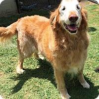 Adopt A Pet :: Coby - BIRMINGHAM, AL
