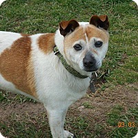 Adopt A Pet :: Hachi - haslet, TX