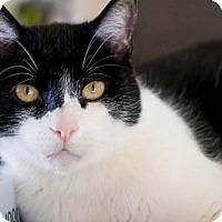 Adopt A Pet :: Mr. Cuddles - Santa Rosa, CA