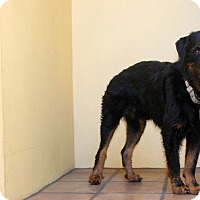 Adopt A Pet :: Jenkins - Los Angeles, CA