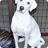 Adopt A Pet :: Tammy - San Jacinto, CA