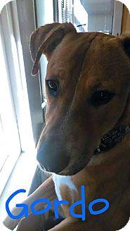 German Shepherd Dog/Labrador Retriever Mix Dog for adoption in Des Moines, Iowa - Cooper