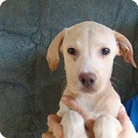 Adopt A Pet :: Rascal - Oviedo, FL