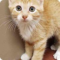 Adopt A Pet :: ADOPTED!!!   Sheila - Channahon, IL