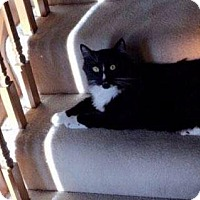 Adopt A Pet :: Jeffrey - Fenton, MO
