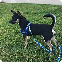 Adopt A Pet :: Oscar - San Leon, TX