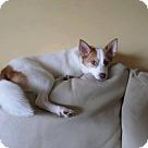 Adopt A Pet :: Jasper (Adoption pending)