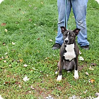 Adopt A Pet :: Rainbow - North Judson, IN