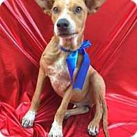 Adopt A Pet :: HONEY - Corona, CA