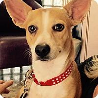 Adopt A Pet :: TENKAY - Palm Desert, CA
