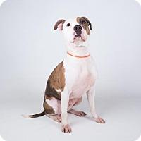 Adopt A Pet :: Chantilly - Decatur, GA