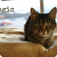 Adopt A Pet :: Magic - West Des Moines, IA