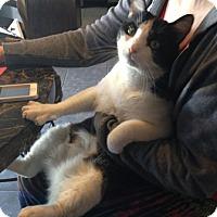 Adopt A Pet :: Clarence - Gilbert, AZ