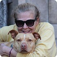 Adopt A Pet :: Tupelo Honey~cat friendly! - Glastonbury, CT