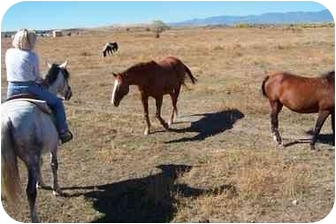 Quarterhorse Mix for adoption in Pueblo, Colorado - Kicks