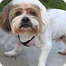 Adopt A Pet :: Zorro