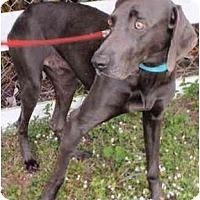 Adopt A Pet :: Martin **ADOPTED** - Eustis, FL