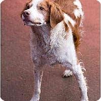 Adopt A Pet :: Freckles - Portland, OR