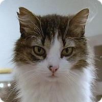 Adopt A Pet :: Cher - Bonita Springs, FL