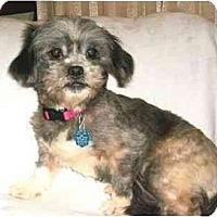 Adopt A Pet :: Skylar - Mooy, AL