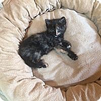 Adopt A Pet :: Baby Ruth - Southington, CT
