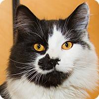 Adopt A Pet :: Freddie - Irvine, CA