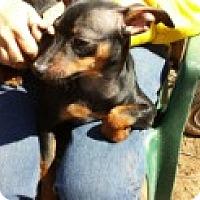 Adopt A Pet :: Abel - Homewood, AL