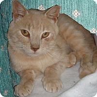 Adopt A Pet :: Spirit - Germansville, PA