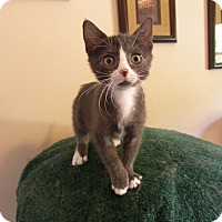 Adopt A Pet :: Armani - Turnersville, NJ