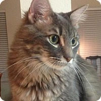 Adopt A Pet :: Xena - Tomball, TX