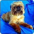 Adopt A Pet :: MINNESOTA HELP NEEDED