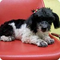 Adopt A Pet :: 'MUMU' - Agoura Hills, CA