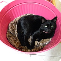 Adopt A Pet :: Sebastian - Jupiter, FL