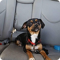 Adopt A Pet :: Luna - bridgeport, CT