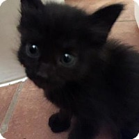 Adopt A Pet :: Burke - Austin, TX