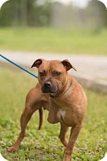 Boxer Dog for adoption in Valley Falls, Kansas - Hezzy