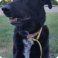 Adopt A Pet :: Patsy - Tomah, WI