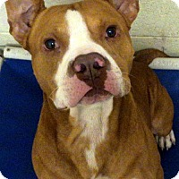 Adopt A Pet :: Yoda - Crown Point, IN