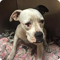 Adopt A Pet :: Frosting - Miami, FL