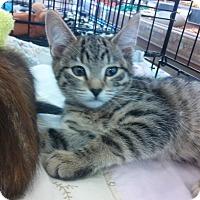 Adopt A Pet :: Daisy - Alamo, CA