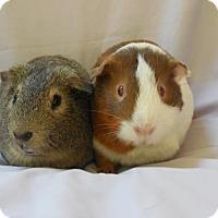 Adopt A Pet :: Lukas - Monrovia, MD