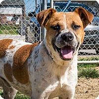 Adopt A Pet :: Adopt Me!!! - Jasper, AL
