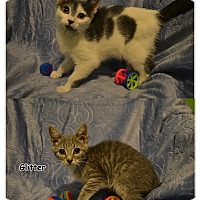 Adopt A Pet :: Sunshine and Glitter - Oyster Bay, NY