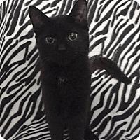 Adopt A Pet :: Juniper - Davison, MI