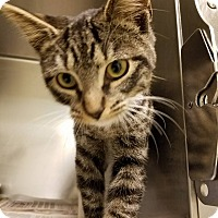 Adopt A Pet :: Donald - Windsor, VA