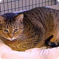 Adopt A Pet :: Mel - Victor, NY