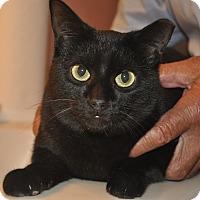 Adopt A Pet :: SILKY-Low fee-VIDEO! - New Smyrna Beach, FL