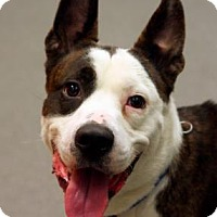 Adopt A Pet :: Achilles - Wichita, KS