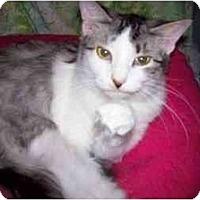 Adopt A Pet :: Jasper - Garland, TX