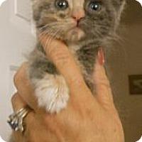 Adopt A Pet :: Carlotta - Reston, VA